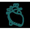 心臟&肝臟 Cardiac & Liver